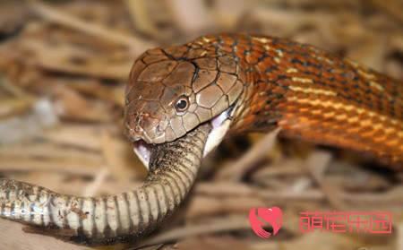 关于王蛇的四个误解