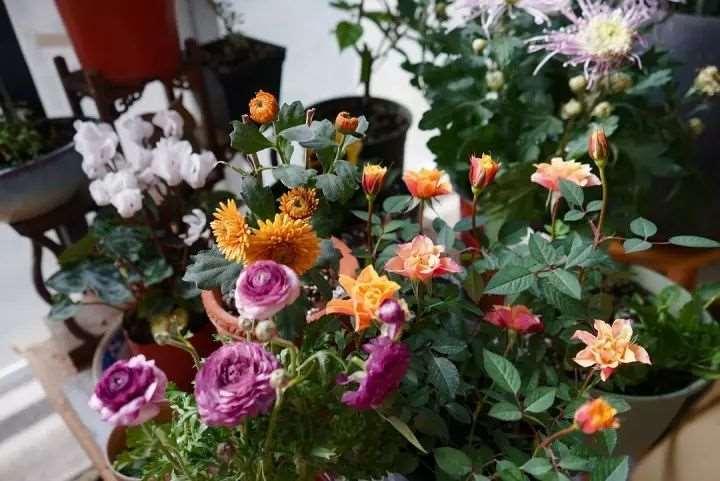 花卉病虫害防